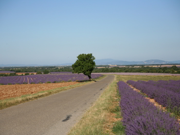 View of Provence duirng our art holidays in France for all levels