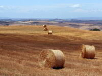 View of haystacks in Tuscany during Walk the Arts painting holidays in Italy